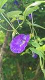 Aparajitha Photos libres de droits