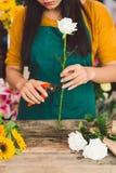 Aparando uma rosa Foto de Stock Royalty Free