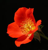 Aparelho Rosa Imagem de Stock