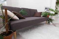 Apartamento-estudio moderno con las plantas vivas gris en el interior Sofá en la sala de estar Imagenes de archivo