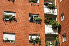Apartment block. With geraniums in the windows Stock Images