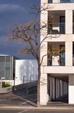 Single tree in a modern architecture royalty free stock image