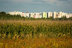 Apartment Buildings in Bratislava. Near a Cornfield Stock Image
