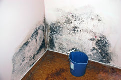 Apartment Mold(Aspergillus) Royalty Free Stock Image