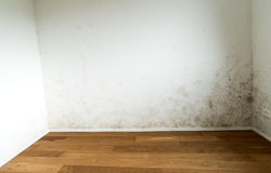 Apartment room with a toxic mold and mildew problem Royalty Free Stock Photo