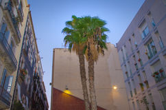Apartments with palm tree in Barcelona. Apartments and a palm tree in a backyard in Barcelona royalty free stock images
