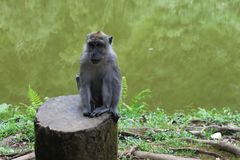 Apasammanträde i Puncak, Indonesien Arkivfoto