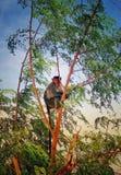 Apasammanträde på ett träd arkivfoto