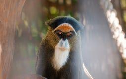 Apastående i zoo Arkivfoto