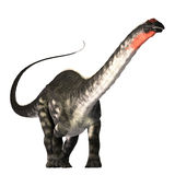 Apatasaurus 01. The Apatasaurus dinosaur was a herbivore of the Jurassic Era. This giant also called Brontosaurus, browsed the tree tops much as a giraffe does Royalty Free Stock Photo