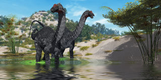 Apatasaurus 02. Two Apatasaurus dinosaur wade through a lush pond looking for plants to eat Stock Photo