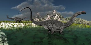 Apatasaurus. Two Apatasaurus dinosaurs wonder through a swamp in prehistoric times Stock Images