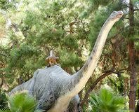 Apatosaurus-юрский период /140 миллион лет назад В Dino Стоковое фото RF