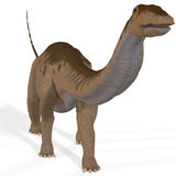 Apatosaurus aka Brontosaurus Stock Images