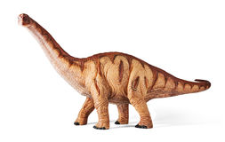 Apatosaurus dinosaurs toy isolated with clipping path. Apatosaurus dinosaurs toy isolated on white background with clipping path. Late Jurassic period Stock Image