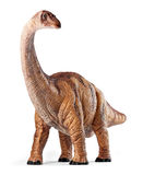 Apatosaurus dinosaurs toy isolated with clipping path. Apatosaurus dinosaurs toy isolated on white background with clipping path. Late Jurassic period royalty free stock photo