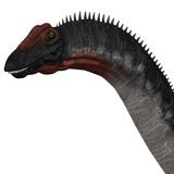 Apatosaurus Head. Apatosaurus also called Brontosaurus is a sauropod dinosaur of Western North America during the Jurassic Era Royalty Free Stock Photo