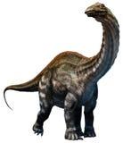 Apatosaurus. A large dinosaur from the Jurassic era Royalty Free Stock Photography