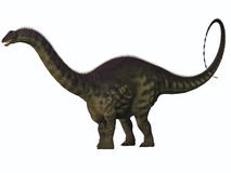 Apatosaurus na bielu Obrazy Stock