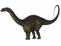 Apatosaurus på vit Arkivbilder