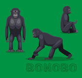 Ape Bonobo Cartoon Vector Illustration Stock Images