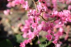 Ape con i fiori ed il sole rosa Immagine Stock