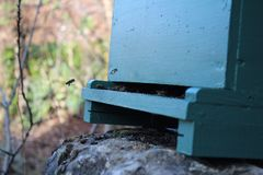 Ape con polline fotografie stock
