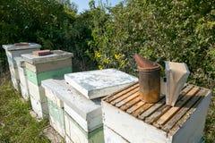 Ape del miele che coltiva le scatole e le attrezzature di apicoltura fotografia stock