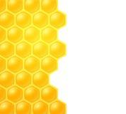 Ape del miele su fondo bianco Fotografie Stock
