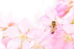 Ape e fiore fotografia stock