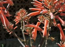 Ape e fiore fotografie stock libere da diritti