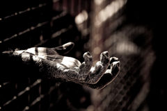 Ape hand. The hand of a chimpanzee into a zoo jail with dramatic treatament royalty free stock image