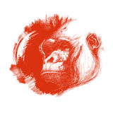 Ape Head Logo In Black And White. Stock Photos