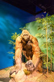 Ape Man. Model of an ape man with bamboo and rocks stock images