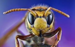 Ape, scambio, miele, insetti del fiore del fondo Fotografia Stock