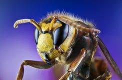 Ape, scambio, miele, insetti del fiore del fondo Fotografie Stock