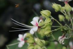 Ape sopra un fiore selvaggio fotografie stock