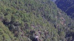 Apearance del bosque desde arriba metrajes