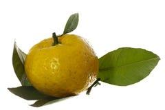 Apelsin Royaltyfri Fotografi