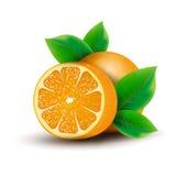 Apelsin stock illustrationer