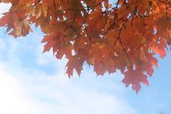 Apelsin färgen av nedgången i Kanada royaltyfria foton