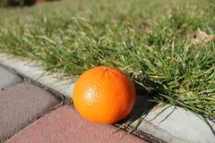 Apelsin i trädgården arkivfoto