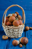 Apelsin-lock soppchampinjoner (aspchampinjoner) Royaltyfri Fotografi