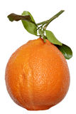 Apelsin med leafen Royaltyfri Fotografi
