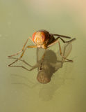 Apelsin- och Amber House Fly Over Double reflexion arkivfoton