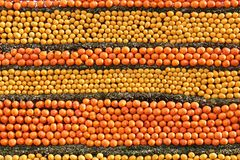 Fruktvägg Arkivfoton