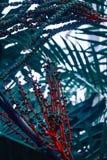 Apelsin och gräsplanfilialblomma Arkivfoto