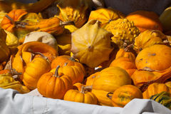 Apelsin- och gulingpumpor i en marknad Arkivfoton