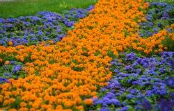 Apelsin- och violetblommor parkerar offentligt arkivbild
