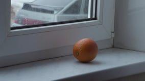 Apelsin på fönsterbrädan stock video